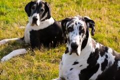 Heathers-Dogs-08-07-2015-61