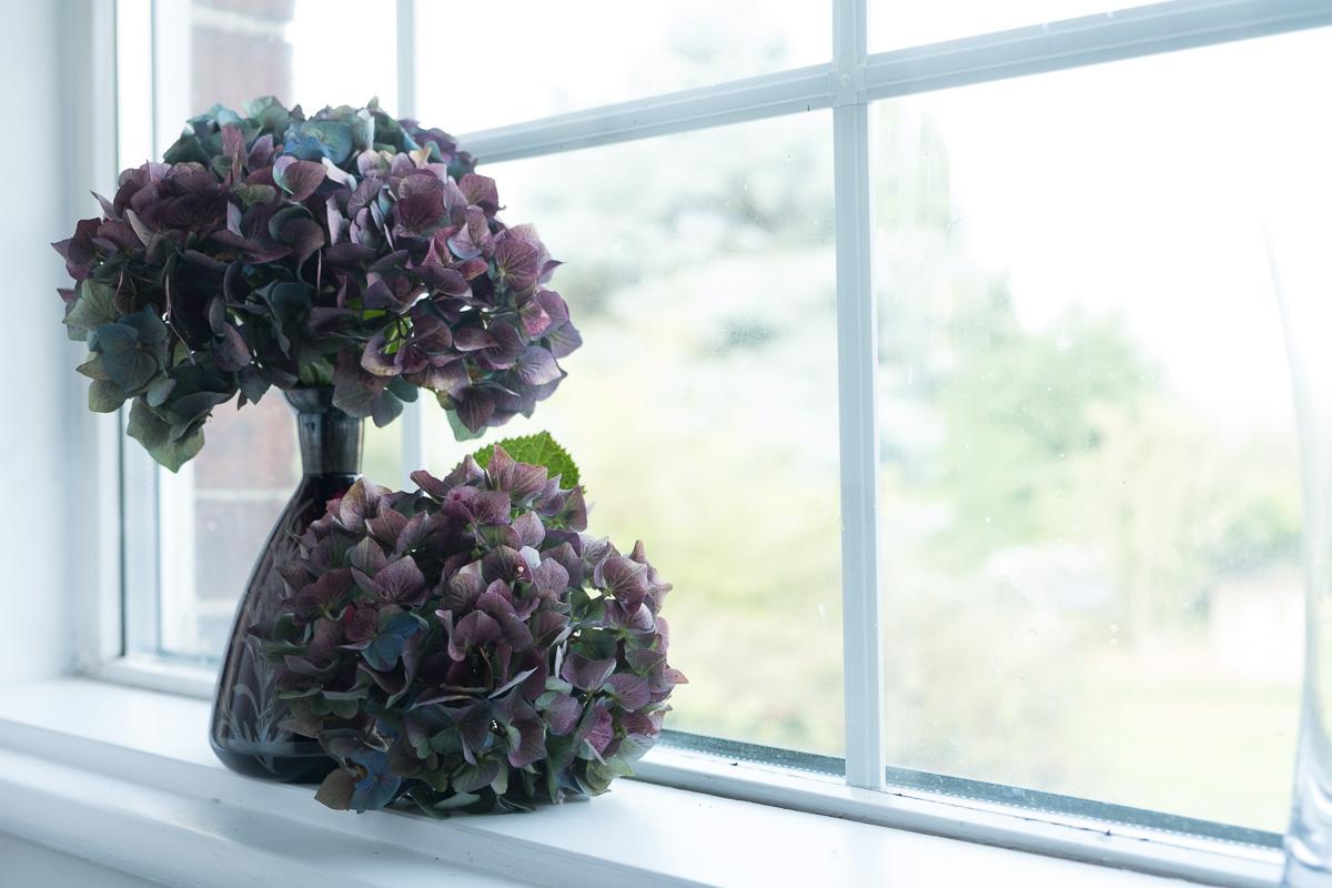 Hydrangea-Purple-73