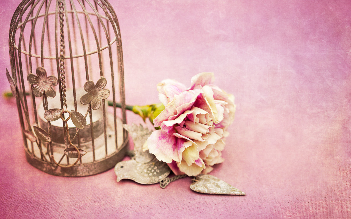 PlumsPixelLove-cage-carnation-2-Full-size