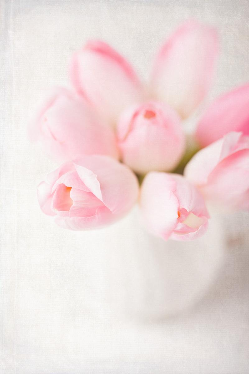 Tulips-16-02-2015-17-Edit