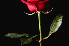 365-2014-Love-7