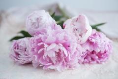 PlumsPixelLove-Pink-peony-2-full-size