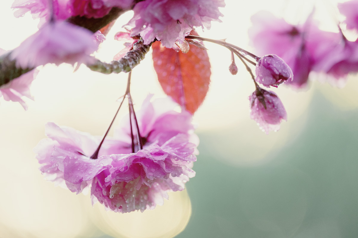 Blossom-26-04-2015-15-Edit