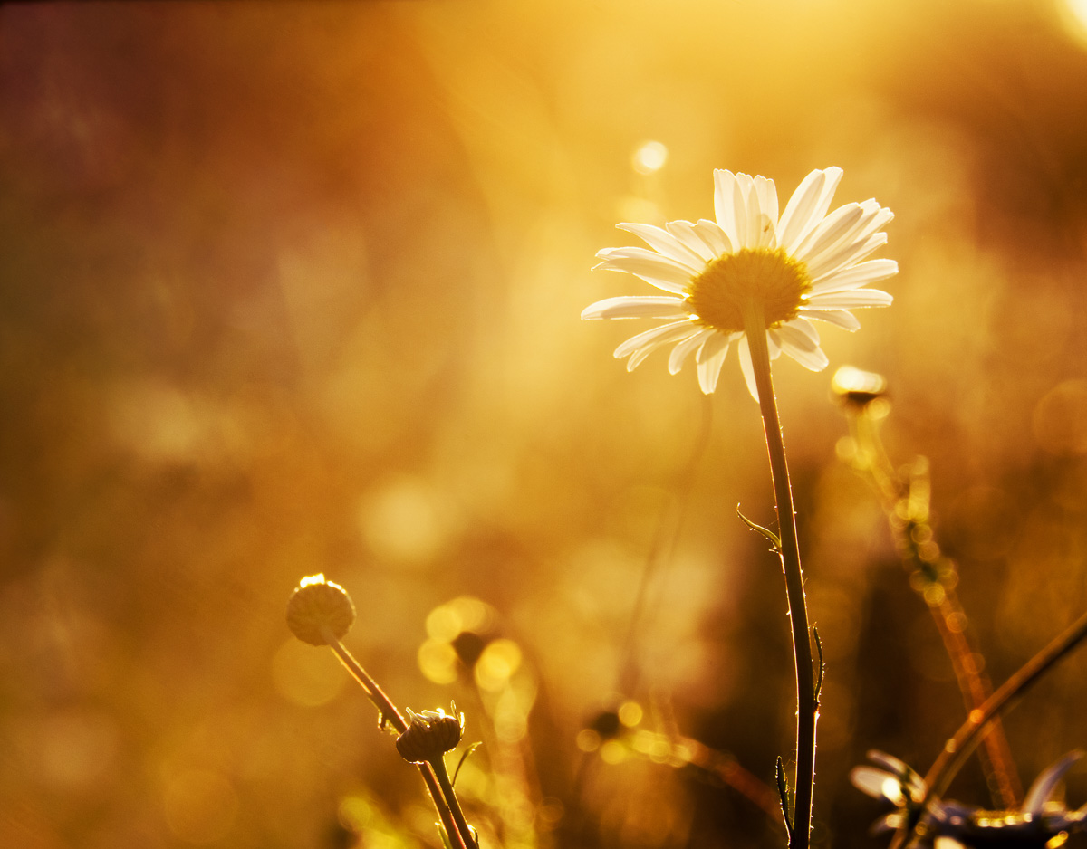 Daisies-03-06-2015-62-Edit