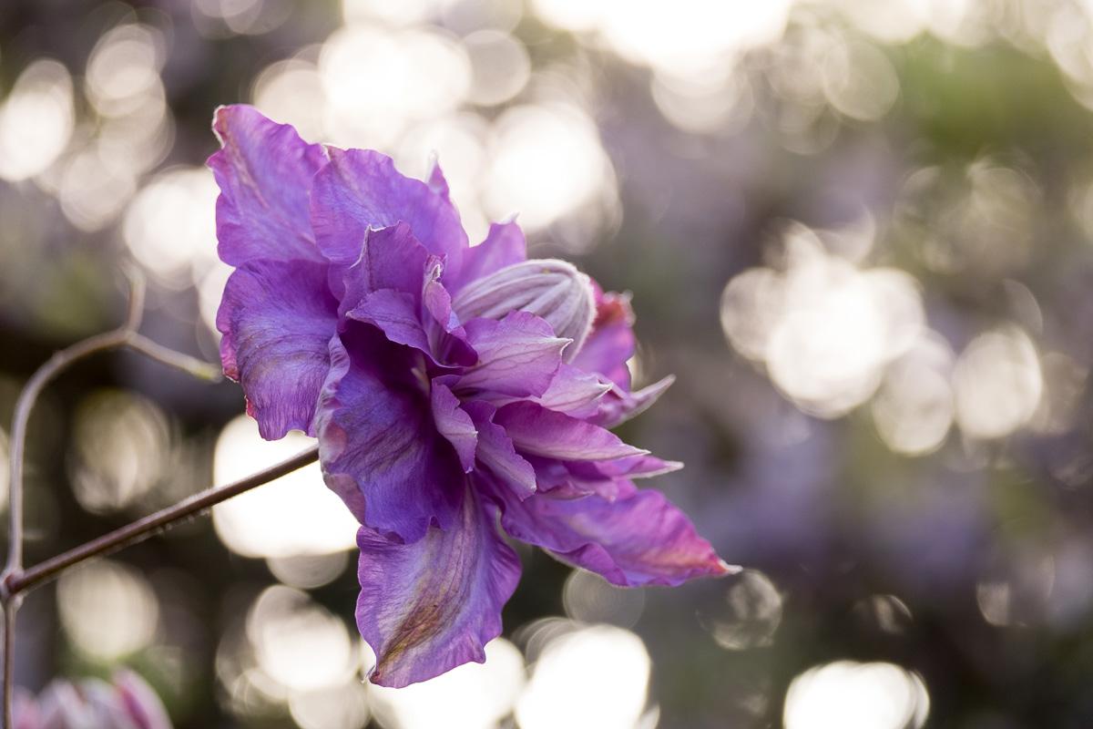Garden-01-06-2015-31