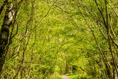 Bowdon-woods-22-04-2015-17