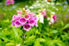 Flower-Farm-15-06-16-10