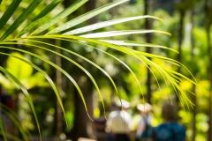 Martinique-Leaf-01-02-2015-1