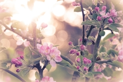 PlumsPixelLove-Blossom-5-Full-size