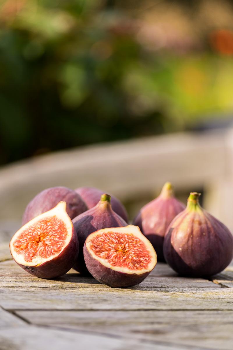 Figs-21-09-2014-21-Edit