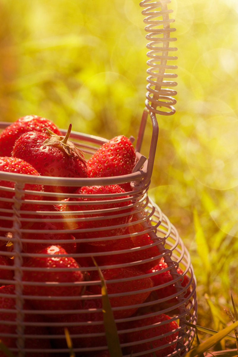 strawberries-11-06-2015-343-Edit