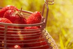 strawberries-11-06-2015-343-Edit