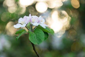 Blossom-F5