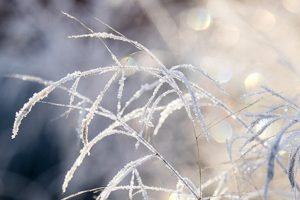frost-f6.4